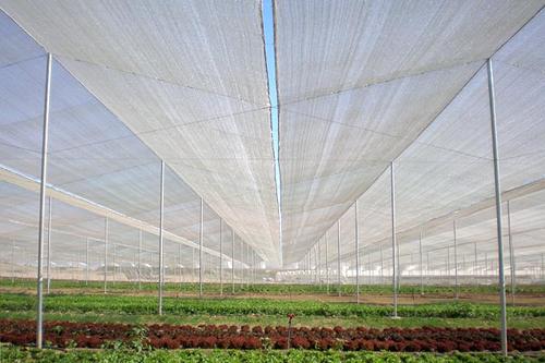Lưới chống côn trùng loại dày 50 mesh politiv israel, lưới chống côn trùng tốt nhất thế giới giá rẻ