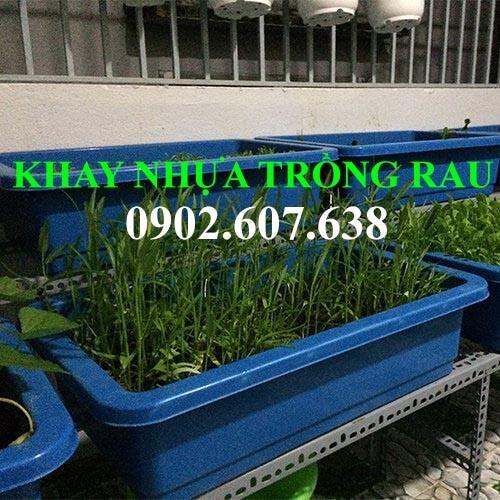 Khay nhựa trồng rau đa năng giá rẻ