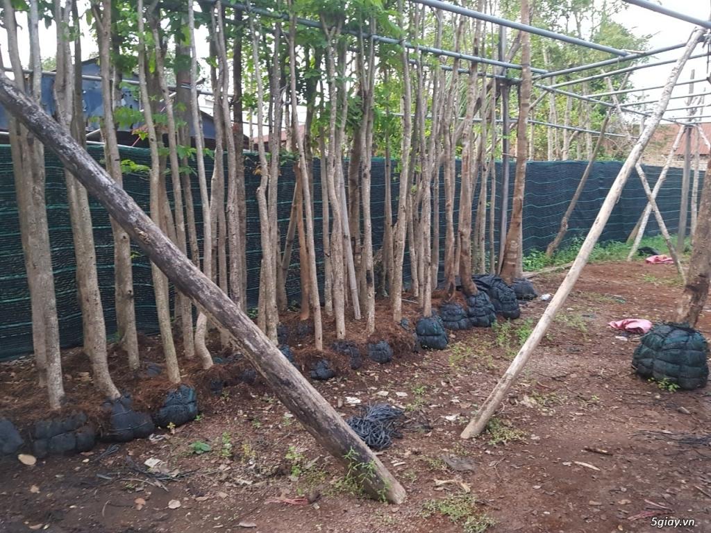Nhận trồng cây cảnh, cây công trình