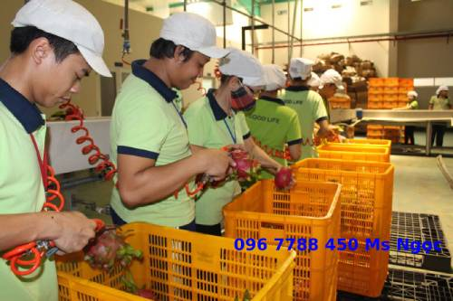 Sóng nhựa đựng hàng hóa trái cây rau củ giá rẻ