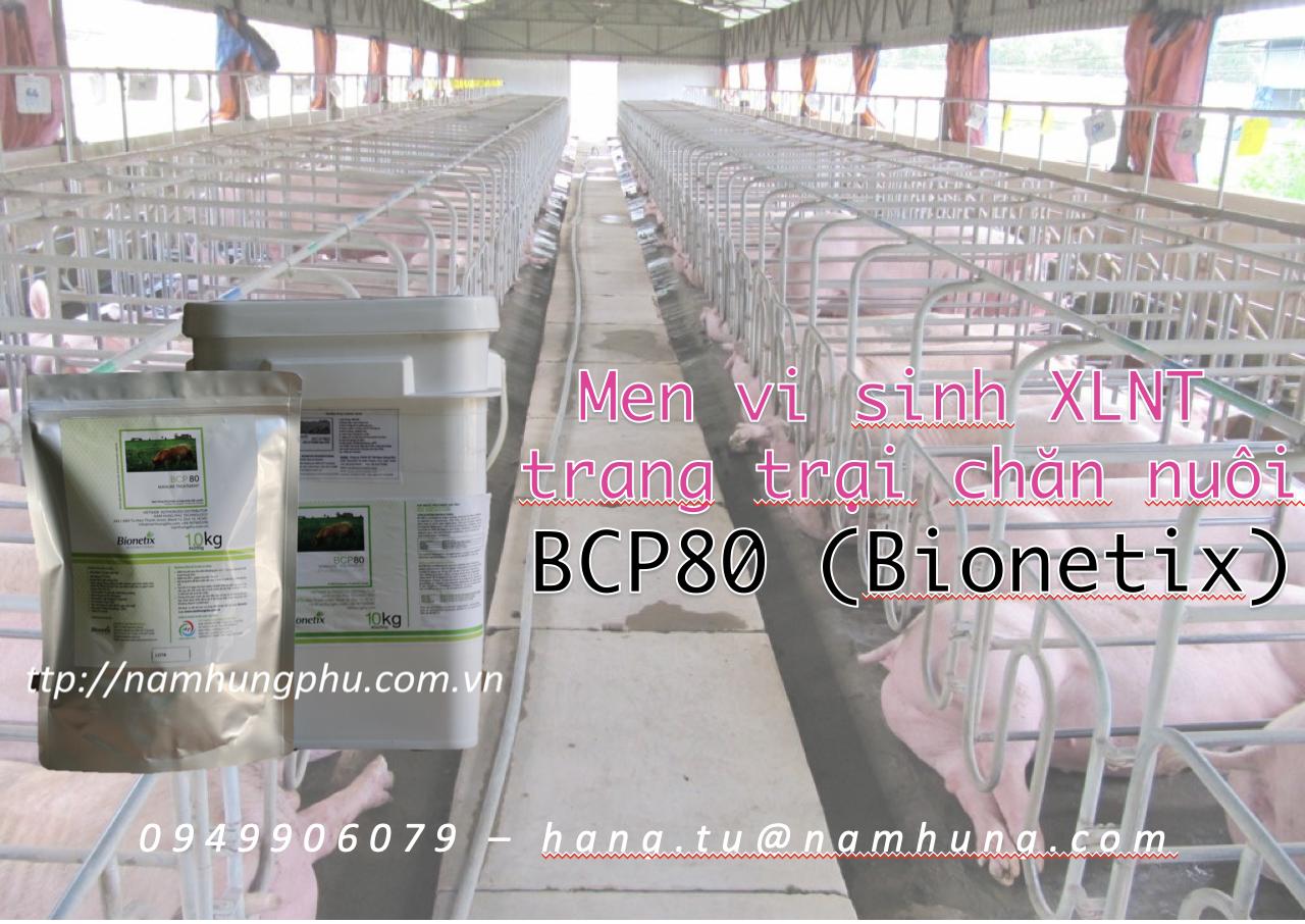 Men vi sinh xử lý nước thải trang trại chăn nuôi BCP80 (Bionetix)