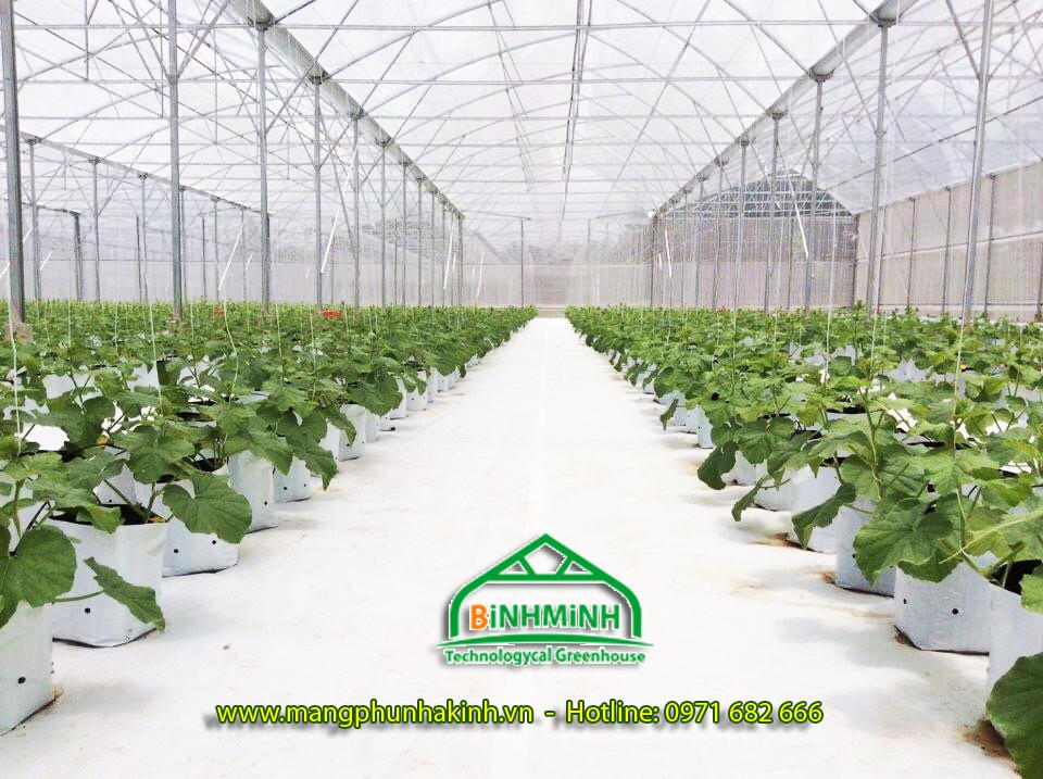Cung cấp bạt trải nền nhà kính, nhà lưới, bạt trải nền trồng dưa lưới số lượng lớn giá tốt nhất