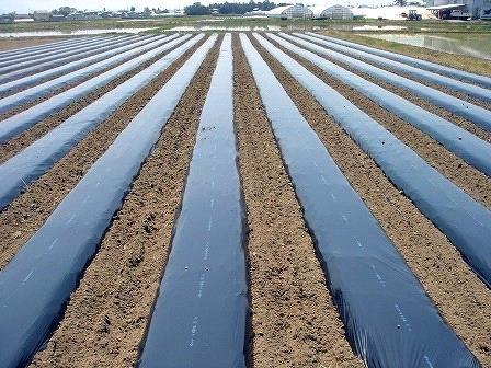 Màng phủ luống đất trồng rau