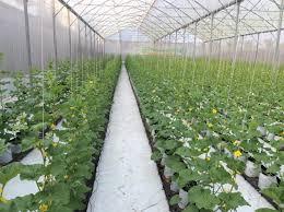 Nhà lưới nông nghiệp politiv israel, vật tư nhà lưới
