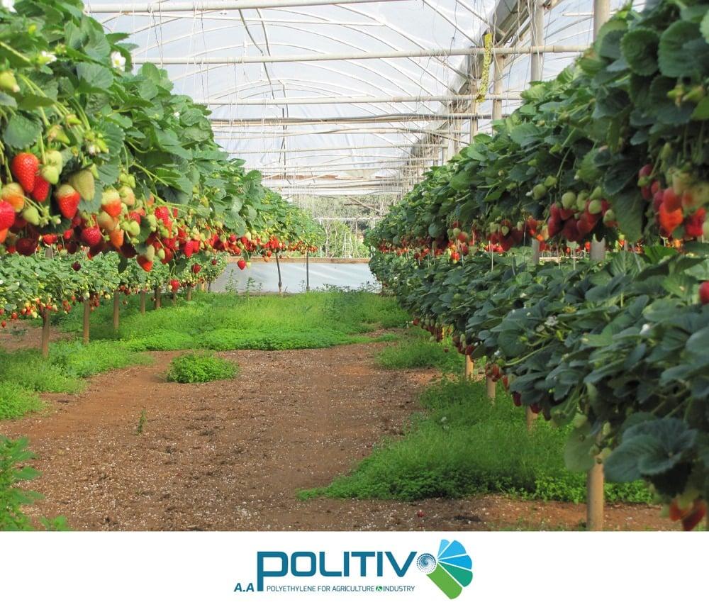 Quy trình xây dựng nhà màng nhà kính, vật liệu làm nhà kính trồng rau,nilon làm nhà kính