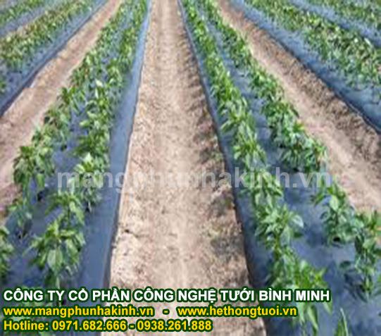 Màng phủ nông nghiệp giá rẻ, báo giá màng phủ nông nghiệp, giá bạt phủ nông nghiệp tại hà nội